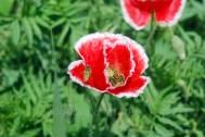 Kausani-Flowers11