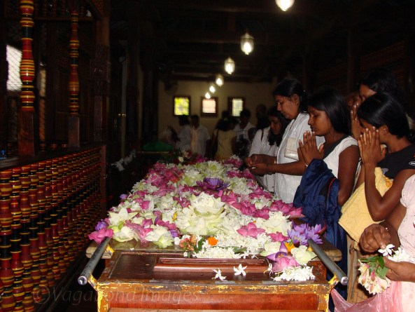 Tooth Relic7