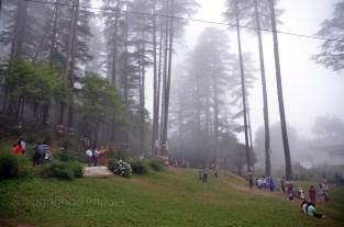 Eco Park amidst deodar trees!