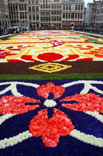 Flower-Carpet-2016_9