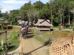 Elephant safari at Phuket, Thailand