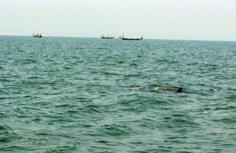 A pair of dolphins with fishermen boats in the background