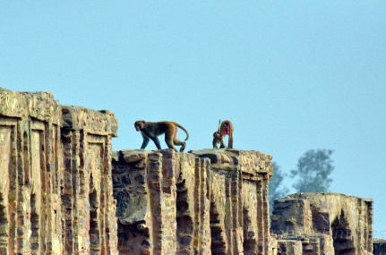 Monkeys rule the roost!