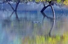 Floating silently