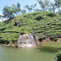Ten things not to be missed while in Munnar