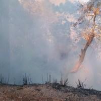 Uttarakhand's spring up in the flames