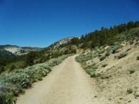 Mt. Rose Trail