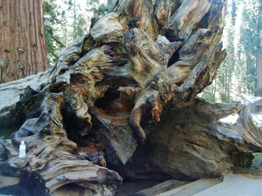 King's Canyon and Sequoia National Park