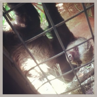 Un oso perezoso lentamente se rasca la panza...