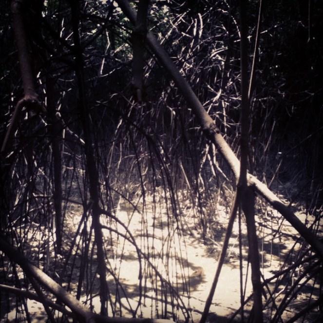 El Parque histórico se encuentra en medio de un manglar