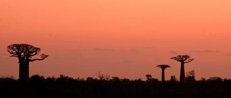 Nuestro primer atardecer con baobabs