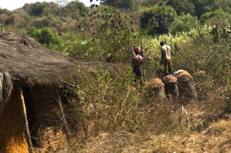 Jóvenes malgaches preparando ron a partir de la caña de azúcar