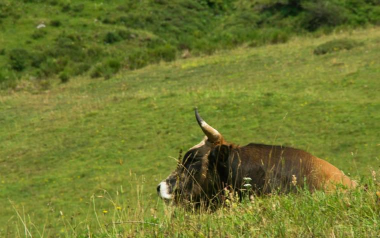 Y ahí estaba el toro al que se refería el cartel. Somiedo, Asturias