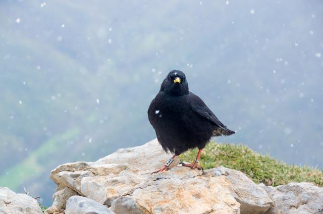 Nevando en Picos de Europa, en el Mirador del Cable al que se sube con el teleférico desde Fuente Dé