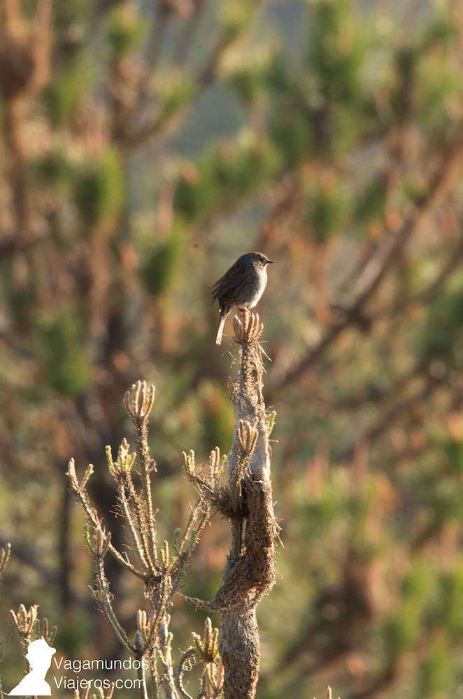 La Sierra De La Culebra En Zamora Es Un Gran Lugar Para Avistar