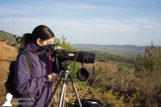 Es imprescindible un telescopio para poder avistar lobos ibéricos en la sierra de la Culebra, Zamora