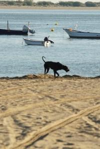 Playa de Bajo Guía en Sanlúcar de Barrameda, Cádiz