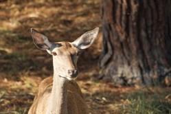 En Doñana es posible ver muchos animales en libertad, como ciervos