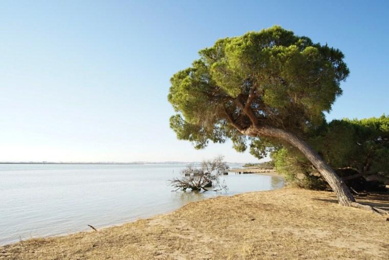 Parque Nacional de Doñana, a orillas del río Guadalquivir