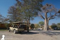 Entrada al Thobolo's Lodge con su baobab, en Kachikau, Botswana