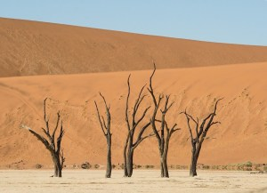 Las acacias deshidratadas de Deadvlei, en el desierto de Namibia