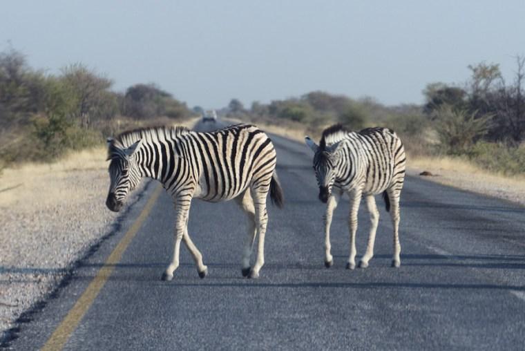 Carretera asfaltada en Namibia (también las cebras parecen apreciarla)
