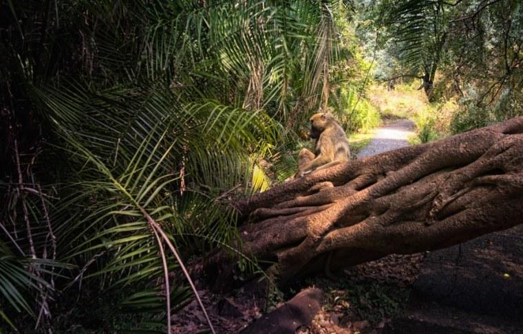 El Parque Natura de las cataratas Victoria en Zimbabue
