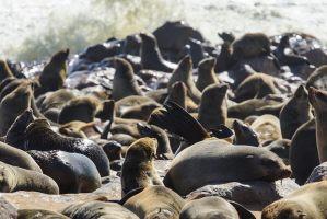 La colonia de leones marinos de Cape Cross es una de las más numerosas del mundo