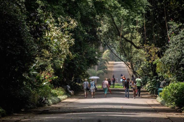 Jardín botánico de Peradeniya en Kandy