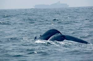 Avistamiento de ballenas azules desde la costa de Mirissa, Sri Lanka