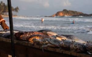 Pescado fresco en los restaurantes de Mirissa, Sri Lanka