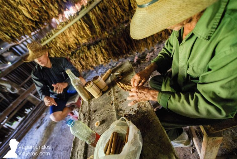 Demostración de cómo se hace un puro en una plantación de tabaco de Viñales, Cuba