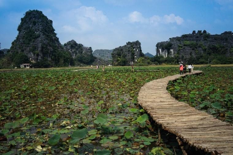 Lago de nenúfares en Mua Cave, Ninh Binh