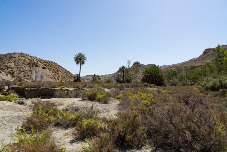 """Oasis creado para la película """"Lawrence de Arabia"""" en el desierto de Tabernas, Almería"""