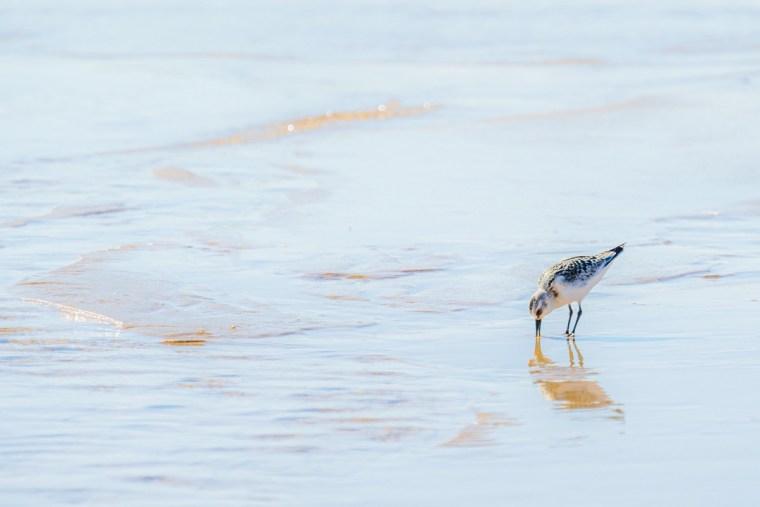 Playa de la Isla Deserta en la Ría Formosa