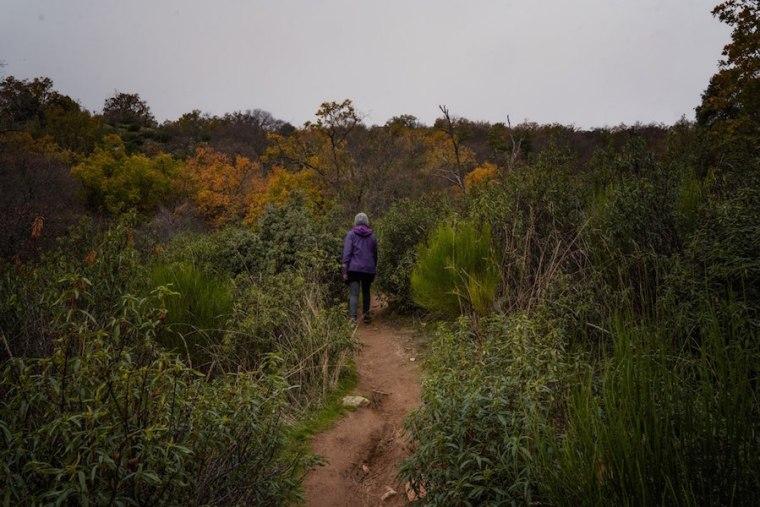 Pista de tierra por el Bosque de la Herrería hacia la Silla de Felipe II, El Escorial
