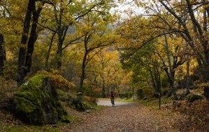 Senda Ecológica por el Bosque de la Herrería a la Silla de Felipe II, El Escorial