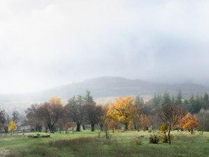 Bosque de la Herrería con niebla, El Escorial