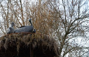 Recreación del nido de un buitre negro en el Centro de Visitantes Valle de El Paular en Rascafría
