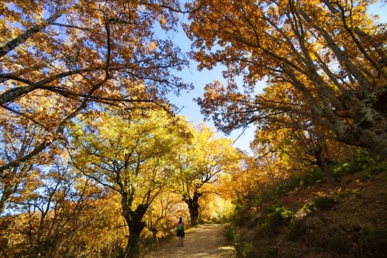 Camino de subida al Collado Hondo en la Sierra del Rincón