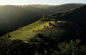 Atardecer en los viñedos de las laderas del río Sil, Ribeira Sacra