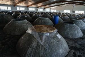 Sala de tinajas en Cooperativa Vinícola de Valdepeñas