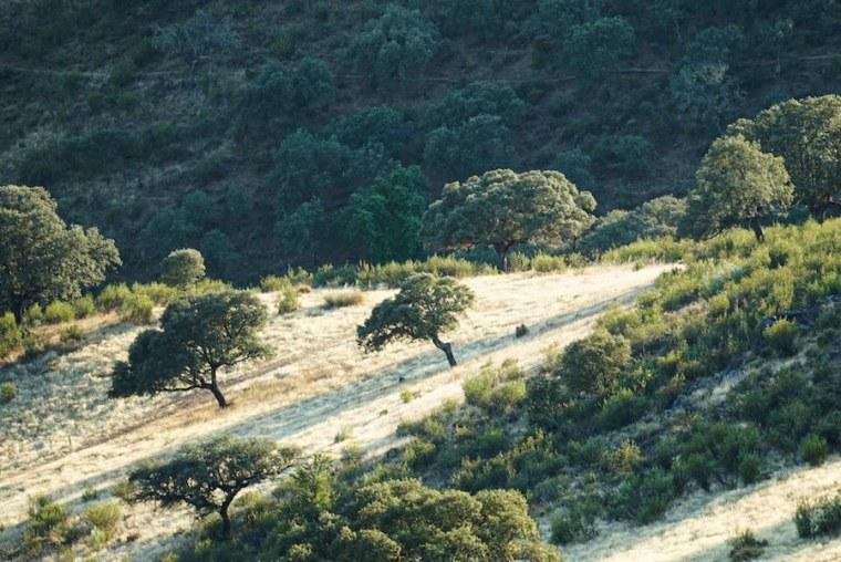 Paisaje típico del Parque Nacional de Monfragüe en Extremadura