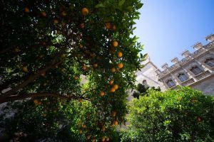 Patio con naranjos en la Lonja de la Seda, Valencia