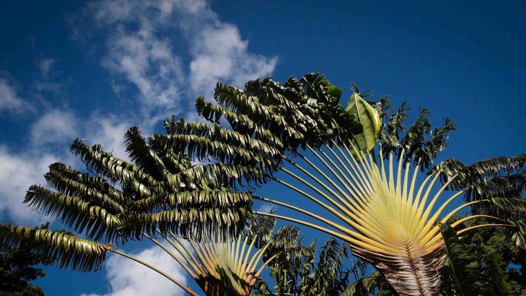 Un día en la Isla de Guadalupe. Las Antillas Francesas