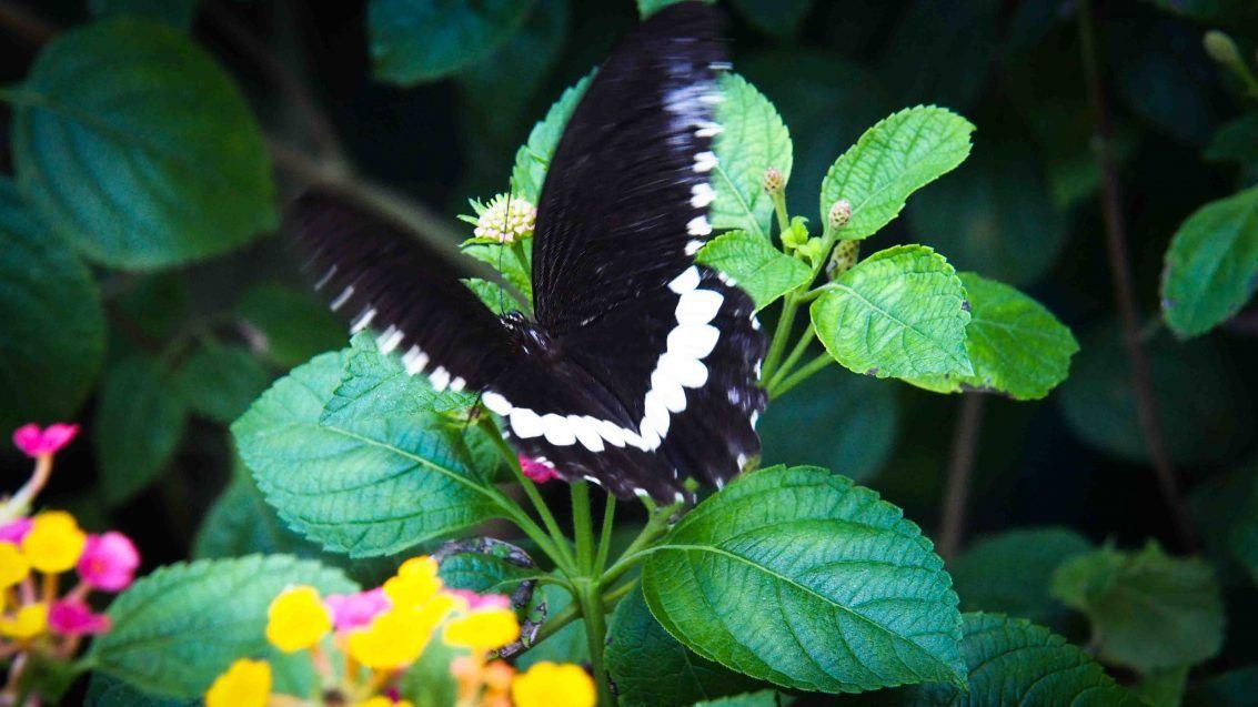 Habitat Butterflies Conservation Center Bohol