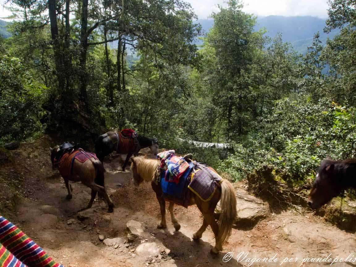 trekking-el-nido-del-tigre-butan