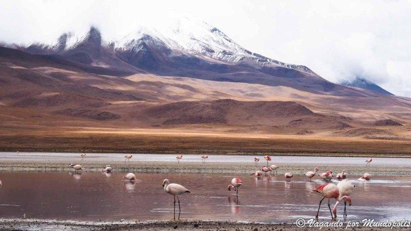 laguna-hedionda-bolivia