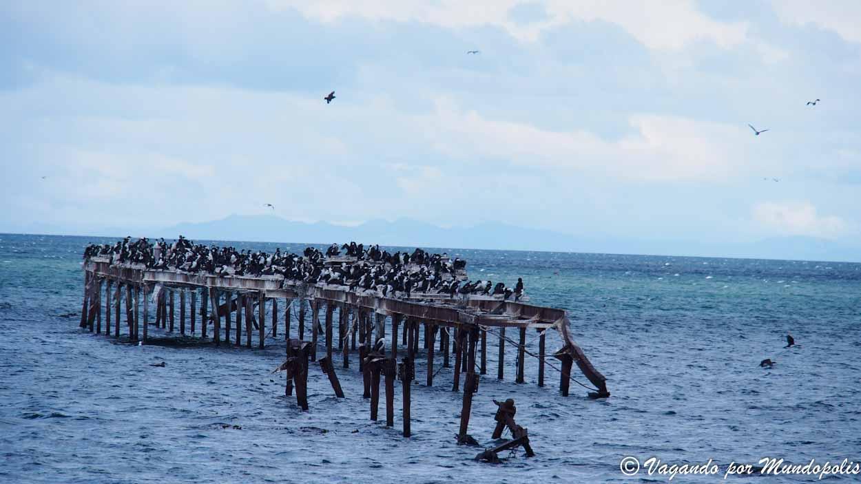 que-ver-en-punta-arenas-costanera