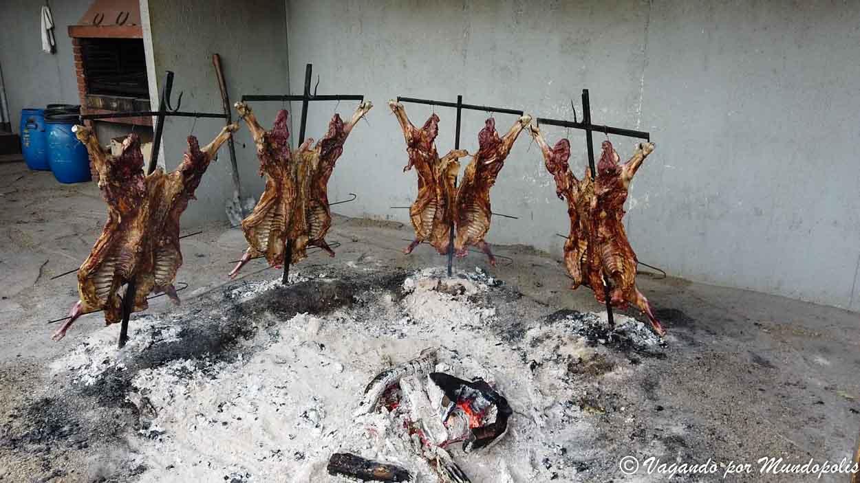 cordero-patagonico